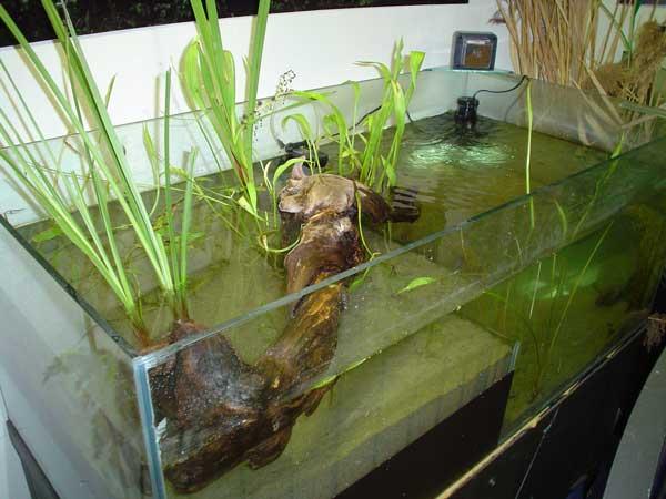centro di educazione ambientale - Acquario Per Gambusie